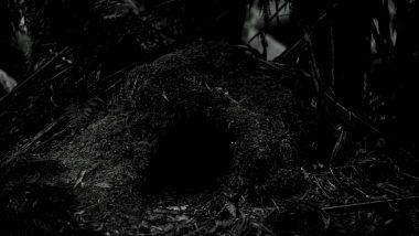 Serbian Cave Hermit: गुहेत राहणारा सर्बियन संन्याशी कोरोना व्हायरस संक्रमीत; Covid-19 लसही घेतली, इतरांनाही लसीकरणाबाबत अवाहन