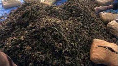 सोलापूर: पीकाला हमीभाव नसल्याचं सांगत शेतकर्याने जिल्हाधिकार्याकडे मागितली गांजा शेती ची परवानगी; पोलिसांनी म्हटलं 'पब्लिसिटी स्टंट'