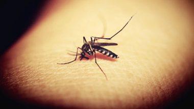 World Mosquito Day 2021: जागतिक डास दिन निमित्त जाणून घ्या आजारांचे निमिंत्रण कसे टाळाल?