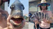 अमेरिकेच्या North Carolina मध्ये आढळला चक्क माणसांप्रमाणे दातांची रचना असलेला  Sheepshead Fish