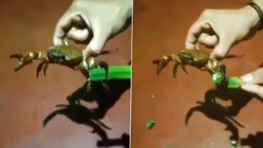 Crab Cutting Vegetables: 'हा' व्यक्ती चक्क खेकड्याकडून कापून घेतो भाजी; पहा Viral Video