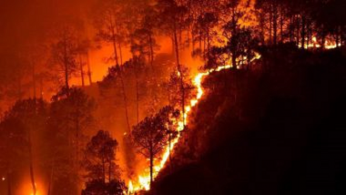 Itly WildFire: इटलीच्या जंगलात भीषण आग, आतापर्यंत आगीमुळे 3 लोकांचा बळी, प्रशासनाकडून हाय अलर्ट जारी