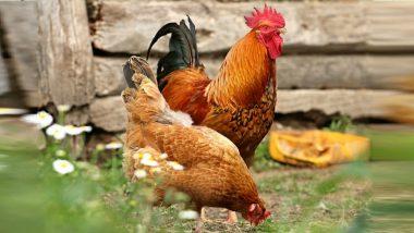 चिकन, अंडी दरात वाढ, खवय्यांच्या खिशाला भार; पाहा पर किलो कितीने वाढले दर