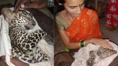Leopard Cub Rescued Rrom Aarey Colony: स्थानिकांच्या मदतीने भर पावसात मुंबईत रस्त्यावर भरकटलेल्या बिबट्याच्या बछड्याची सुखरूप सुटका
