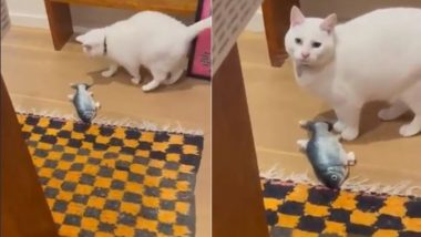 ऑस्ट्रेलियातील मेलबर्न मध्ये भुकंप येण्यापूर्वी मांजरीने पहा कशा  पद्धतीने मालकाला केले अलर्ट (Video)