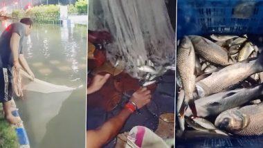 Kolkata Rains: रस्त्यावर साचलेल्या पाण्यात मिळाले 15 किलोचे Catla Fish, पहा व्हिडिओ