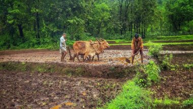 Crop Damage In Maharashtra: पावसामुळे महाराष्ट्रातील पिकांचे मोठ्या प्रमाणावर नुकसान; तब्बल 7 लाखांहून अधिक शेतकऱ्यांचा विमा कंपन्यांना फोन
