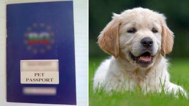 कुत्र्याच्या सुविधेसाठी मालकाने चक्क बुक केले एअर इंडियाचे बिझनेस क्लास, ऐवढा आला खर्च