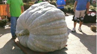 Pumpkin: तब्बल 10 क्विंटल वजनाचा जगातील सर्वात मोठा भोपळा, जागतिक विक्रमाची नोंद