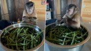हातात आलेली फरसबी मोडत असल्याने चिडलेल्या माकडाचा गोड अंदाज सोशल मीडीयात वायरल